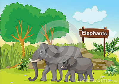 The two gray elephants near a wooden signage