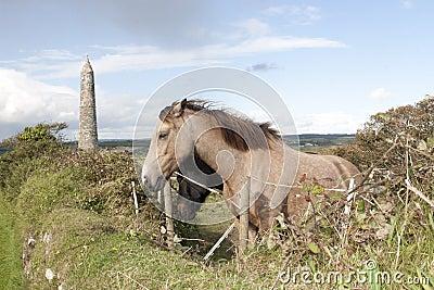 Two grazing Irish horses and ancient round tower