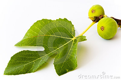 Two green figs and a leaf