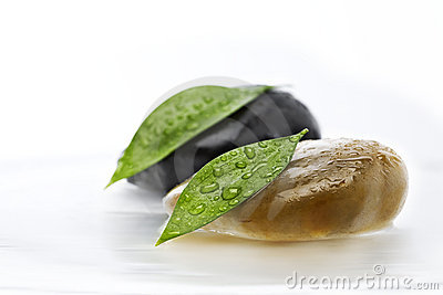 Two green leafs on stones