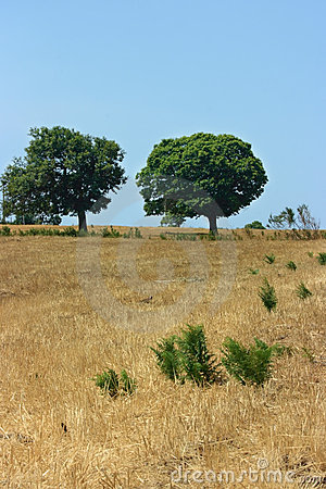 Two green trees on yellow field