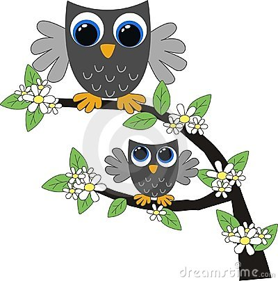 Two grey owls