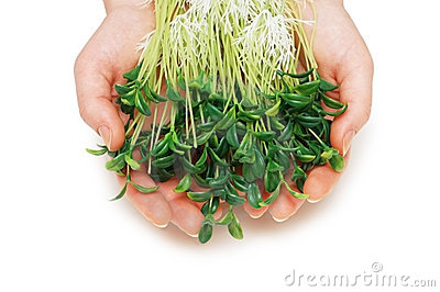 Two hands holding herbs