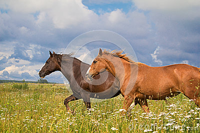 Two horse running