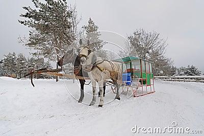 Two-horse Sleigh (Zanka-2)