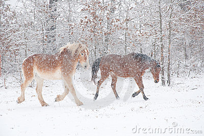 Two horses in a blizzard