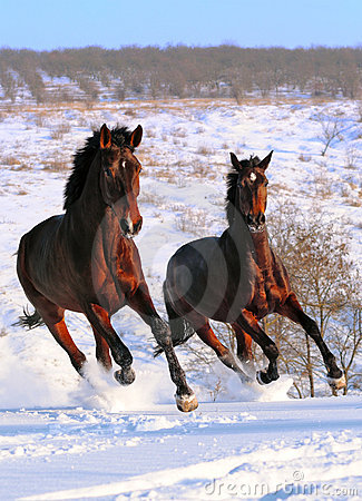 Two horses galloping in field