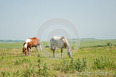 Two horses grazing against vast wide open prairie