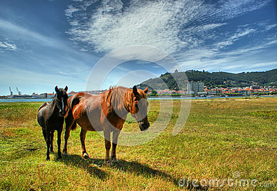 Two horses grazing in Viana do Castelo, Portugal
