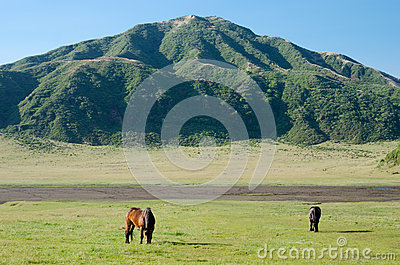 Two horses on the green field