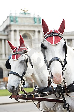 Two horses with harness