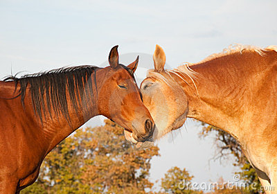 Two horses looking like they were hugging