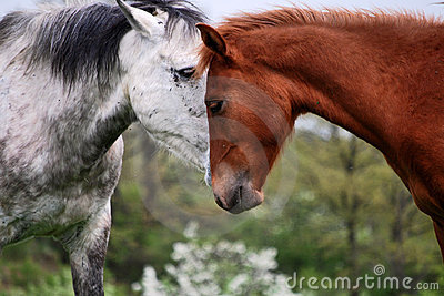 Two horses love