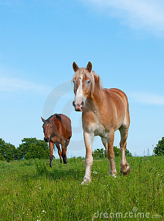 Two horses in lush spring pasture