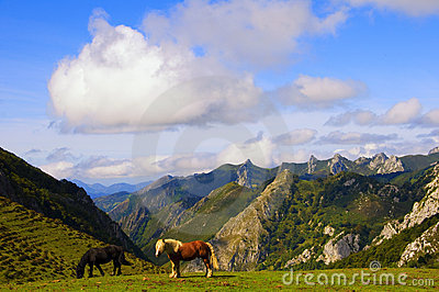 Two horses in the mountain pastures
