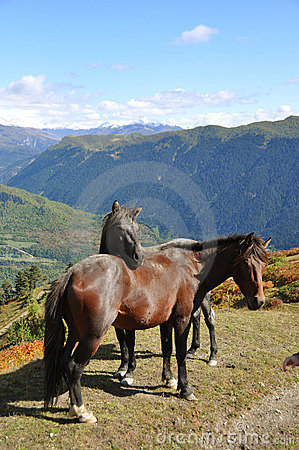 Two Horses in the Mountains