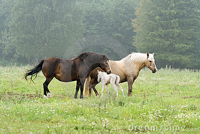 Two horses and newborn foal