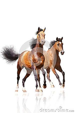 Free Two Horses On White Royalty Free Stock Photo - 12693315