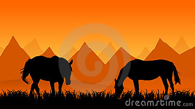 Two horses on pasture