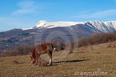 Two horses on a pasture against mountains