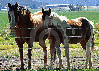Two horses posing for me.