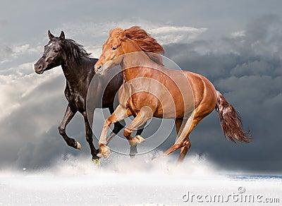 Two horses runs