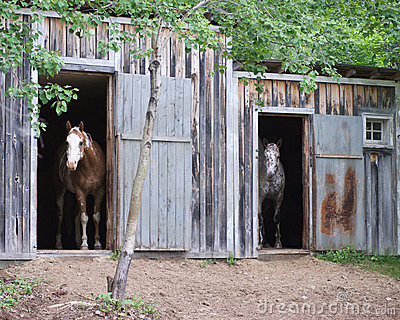 Two horses in stables