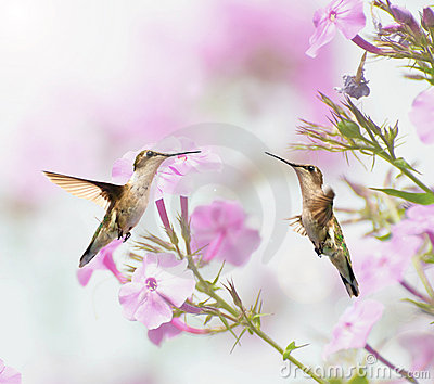 Two hummingbirds inmotion.