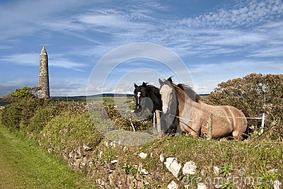 Two Irish horses and ancient round tower