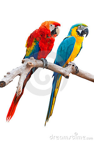 TWO ISOLATED PARROT