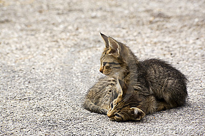 Two kitten on the street in greece
