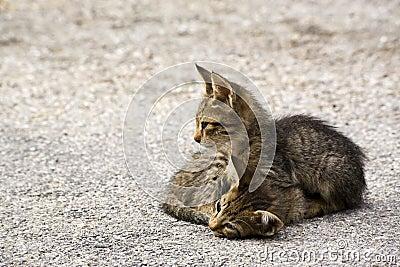 Two kitten on the street in greece