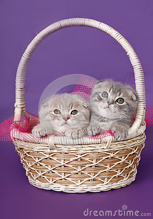 Two kittens in a basket.