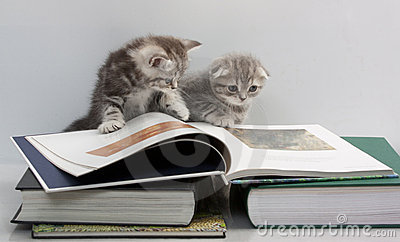 Two Kittens Are Considering A Book Stock Image - Image: 15221691