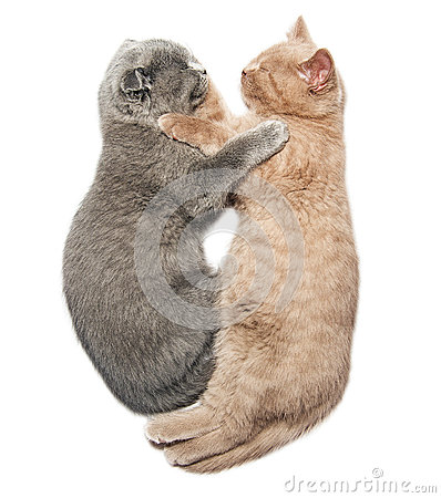 Free Two Kittens Hugging Sleep Royalty Free Stock Photo - 48298185