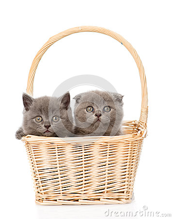 Free Two Kittens In Basket Looking At Camera. Isolated On White Stock Photography - 58347912