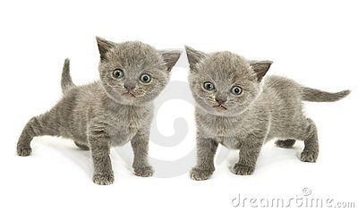 Two kittens over white