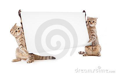 Two kittens with placard or banner