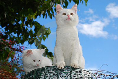 Two Kittens on Top of Roll of Garden Fencing