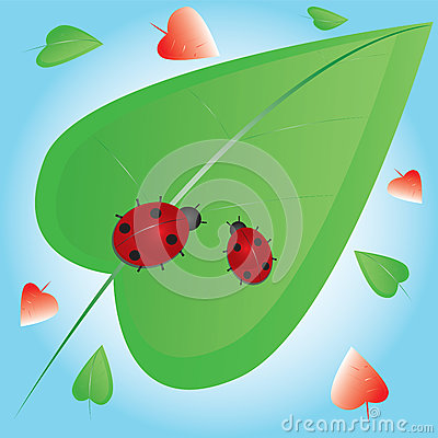 Two ladybugs on green leaf
