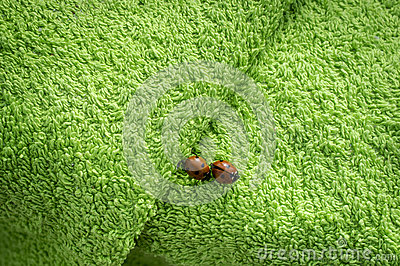 Two ladybugs on green towel