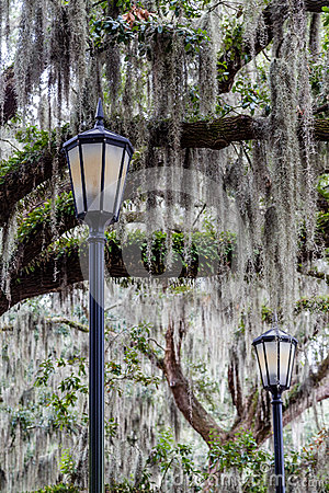 Free Two Lamps And Spanish Moss Stock Photos - 61449123