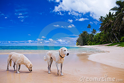 Two large dogs on a deserted tropical beach