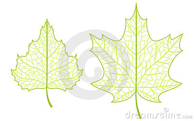 Two leaves.