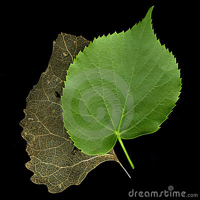 Two leaves - concept of time passing or old and ne