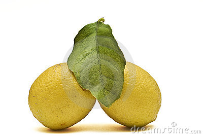 Two lemons and one leave.