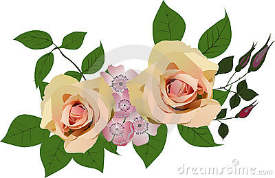 Two light roses decoration on white