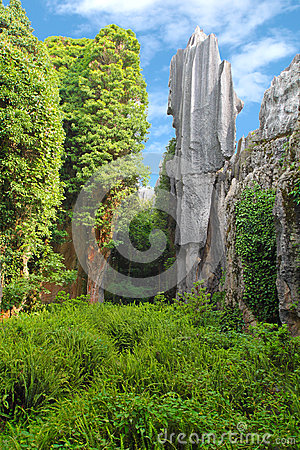 Two limestones at Kunming Stone forest, Shilin