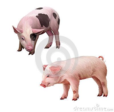 Free Two Little Piglets Pink And Spotted. Isolated Illu Royalty Free Stock Image - 29747486