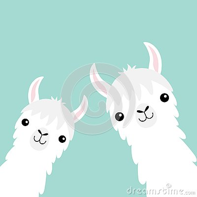 Two llama alpaca animal set. Face neck. Fluffy hair fur. Cute cartoon funny kawaii character. Childish baby collection. T-shirt, g Vector Illustration